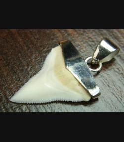 SHARK HAI ZAHN FOSSILER HAIFISCHZAHN (Prionace glauca) SILBER ANHÄNGER SILBER